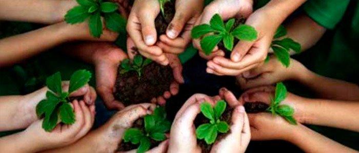 ¡10 consejos para proteger el medio ambiente!